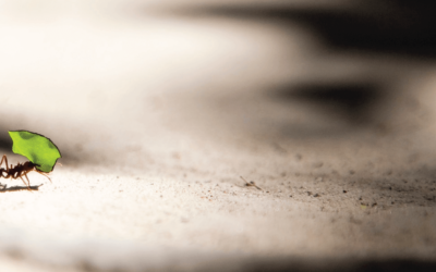 Consider the Ant: Why Daily Faithfulness Matter